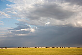 Herd of elephants with dramatic clouds in Lake Manyara National Park, Tanzania