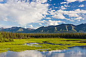Scenic view of wetlands and mountains north of Kluane Lake, Yukon Territory, Canada, Summer