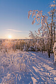 Hoarfrost covered trees and brush at sunset, Copper River Valley, Southcentral Alaska, winter