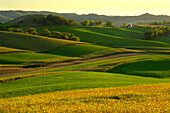 Agriculture - Rolling alfalfa fields and corn silage fields in late afternoon light with a farmstead in the distance  Southwest Wisconsin, USA.