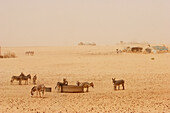 Tiriken, A Tuareg Village In The Dust Created By The Harmattan Wind Coming From The Sahara Desert, Mali