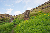Moai By The Quarry In The Crater Of Rano Raraku Volcano, Rapa Nui Easter Island, Chile