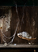 Cotton and drying leaves hanging in cobwebs