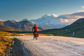 A man bicycle touring in Denali National Park with Mt. McKinley in the background, Interior Alaska, Summer