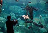 A tourist taking pictures with a smart tablet at The Sealife Center in Seward, Alaska.