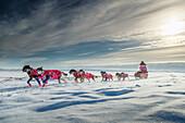 DeeDee Jonrowe runs on the slough just before the Shaktoolik checkpoint during Iditarod 2015