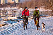Bicyclists on the Tony Knowles Costal Trail led by an Alaskan Husky with downtown Anchorage in the background, Southcentral Alaska, USA, Winter