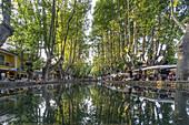 The Etang, Pond with Platane trees, Cucuron, Provencial Village, Vaucluse department, Lubern, Provence-Alpes-Cote d'Azur, France