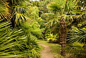 Palm trees, Botanical gardens of Chateau de Vauville, Cotentin, Normandy, France, Europe