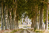 Looking towards an old mansion down an avenue of trees near Chinon, Indre et Loire, France, Europe