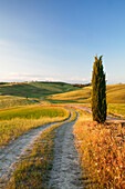 Tuscan landscape with cypress tree, near San Quirico, Val d'Orcia Orcia Valley, UNESCO World Heritage Site, Siena Province, Tuscany, Italy, Europe