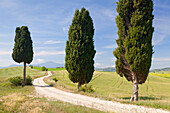 Tuscan landscape with cypress trees, near Pienza, Val d'Orcia Orcia Valley, UNESCO World Heritage Site, Siena Province, Tuscany, Italy, Europe