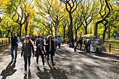 The Mall in autumn, fall in Central Park with alley of trees, Manhattan, New York City, USA, America