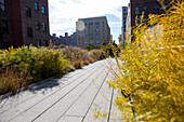 High line, park built on an elevated section of a disused railroad, downtown, Manhattan, New York City, USA, America