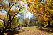 Autumn in Central Park, colourful trees and landscape, Indian summer, skyline in the background, Manhattan, New York City, USA, America