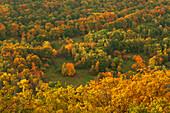 Autumn colours, near Annweiler, Palatinate Forest nature park, Rhineland-Palatinate, Germany