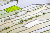 Elevated view of flooded rice terraces during early spring planting season, Batad, Philippines