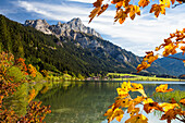 Lake Haldensee in fall with Haller, Rote Flueh and Gimpel mountain, Tannheim valley, Alps, Austria, Europe