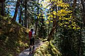 hiker in mountain forest, Mixed forest, fall, Kramer, Garmisch, Kramer, Garmisch, Upper Bavaria, Alps, Germany, Europe
