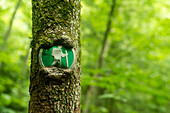 Hiking trail sign with tree partially grown around in in the Virgin Falls State Natural Area, Sparta, Tennessee.