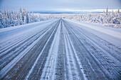 Snow covered trees at Dalton Highway, Yukon-Koyukuk Census Area, Alaska, USA
