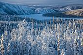 Snow covered trees at Yukon River, Yukon-Koyukuk Census Area, Alaska, USA