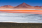Flamingos at Red Lagoon Laguna Colorada, a salt lake in the Altiplano of Bolivia in Eduardo Avaroa Andean Fauna National Reserve, Bolivia, South America