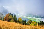 Nebelstimmung überm Inntal, herbstlich verfärbte Buchen im Vordergrund, Heuberg, Chiemgau, Chiemgauer Alpen, Oberbayern, Bayern, Deutschland
