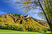 Herbstlich verfärbte Bäume vor Heuberg, Nußdorf, Inntal, Chiemgau, Chiemgauer Alpen, Oberbayern, Bayern, Deutschland
