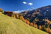 Almhütte mit herbstlich verfärbten Lärchen und Schneeberge, Glocknergruppe, Hohe Tauern, Nationalpark Hohe Tauern, Osttirol, Tirol, Österreich