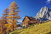 Several persons hiking in front of larches in autumn colours and hut Austriahuette with Torstein in background, Austriahuette, Dachstein range, Styria, Austria
