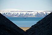 View through mountain slopes to the beach, Arctic ocean, snow covered mountains and blue sky, Spitsbergen, Svalbard, Norway