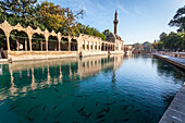 Chamber of Abraham and a minaret reflected in the tranquil water of the pool of sacred fish, Sanliurfa, Turkey