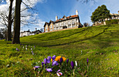 Low angle view of a large house at the top of a grassy hill and tulips blossoming in the foreground, Whitburn, Tyne and Wear, England