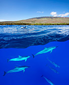 A split view of spinner dolphin Stenella longirostris below water and the island of Lanai above, Hawaii, United States of America