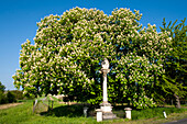 blooming chestnut tree, shrine in Oggau am Neusiedler See, UNESCO World Heritage Site The Cultural Landscape Fertoe-Lake Neusiedl, Burgenland, Austria