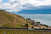 Vineyards in spring, UNESCO World Heritage Site Vineyard Terraces of Lavaux, Lake Geneva, Vaud Canton, Switzerland