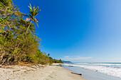 Tall palms and jungle behind the beach at this popular southern Nicoya Peninsula surf resort, Santa Teresa, Puntarenas, Costa Rica, Central America