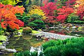 Still ponds in Japanese garden