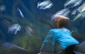 Blurry shot of a child's motion while watching fish in a big fish tank, Aquarium Berlin, Germany