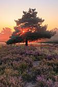 Sunbeams over Mehlinger heath, Mehlingen, Kaiserslautern, Rhineland-Palatinate, Germany