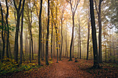 Autumn in the Palatinate Forest, stunning atmosphere with fog, Palatinate Forest, Rhineland-Palatinate, Germany
