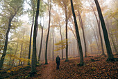 Young man hiking through the autumnal Palatinate Forest, Palatinate Forest, Rhineland-Palatinate, Germany