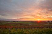 Sunrise at Rheinebene near Landau, Rhineland-Palatinate, Germany