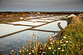 salt worker collecting sea salt from the salt marshes of the guerande peninsula, salt from a salt pan, fleur de sel, the salt pans of guerande (44), loire-atlantique, france