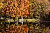 etang de la herse lake, belleme forest in the colors of autumn, (61) orne, lower normandy, france