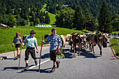 farmers of liechtenstein leading their cows back to the stables following a summer spent in the high mountain pastures, principality of liechtenstein