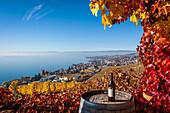 perspective sur les vignes de la region viticole du lavaux depuis le village de grandvaux avec le lac leman et lausanne en fond, au premier plan une vigne et un tonneau avec une bouteille de vin rouge et un tire-bouchon, region inscrite sur la liste du pa