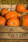 pumpkin turned into a jack o'lantern, symbol of halloween, viltain farm, jouy en josas (78), ile de france