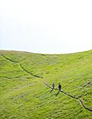 Two people walk a trail across a green landscape. The image was taken on Mount Tamalpais near San Francisco California
